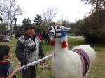A man and his llama at Quinta Normal.