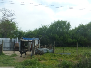 A house along the side of the road in Melipilla.
